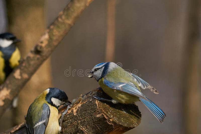 Ready for a fight , one against two rivals. royalty free stock photography