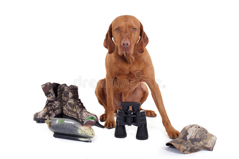 Ready for hunting. Hunting dog with boots, hat, duck decoy and binoculars on white background stock photography
