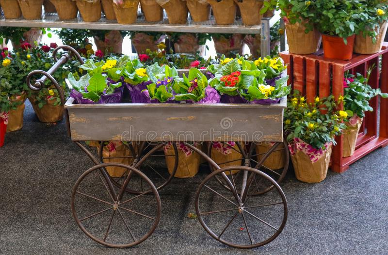 Ready for Spring - Garden wagon full of potted flowers in front of shelves of potted roses - selective focus royalty free stock image