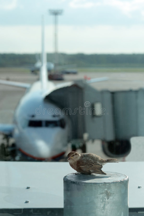 Free Ready To First Flight Stock Image - 6113061