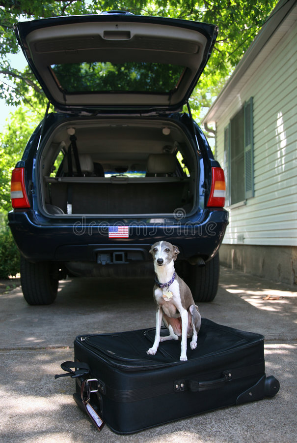 Free Ready To Go - Dog On A Suitcase Royalty Free Stock Photo - 5076125