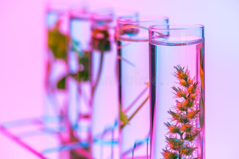 Reageerbuisinstallatie in rek, het concept van het biotechnologieonderzoek stock fotografie