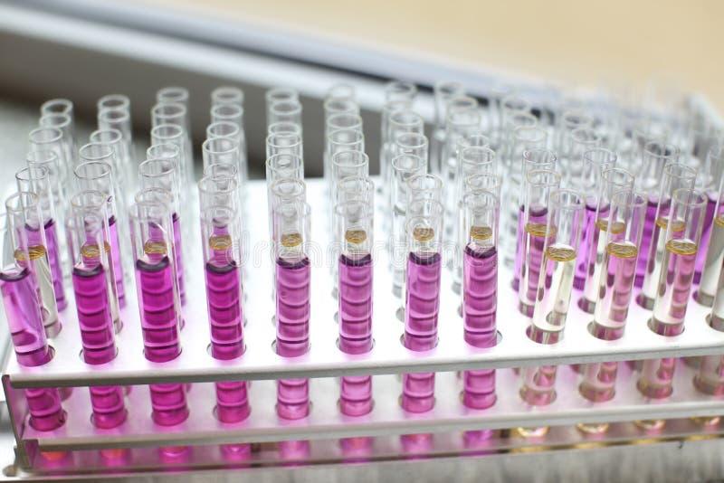 Reageerbuizen met roze vloeistoffen worden gevuld die stock afbeeldingen