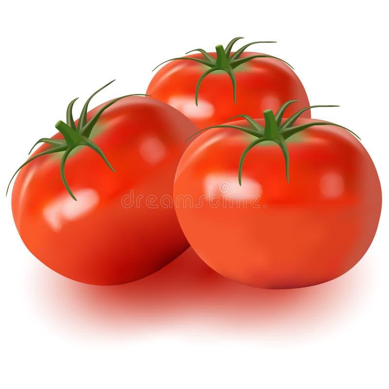 Realístico dos tomates isolados no fundo branco ilustração stock