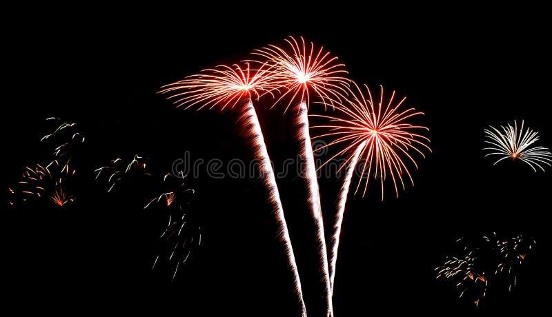 Realów Odosobneni fajerwerki, Kokosowi drzewa lub kwiatu wzór, zdjęcie royalty free