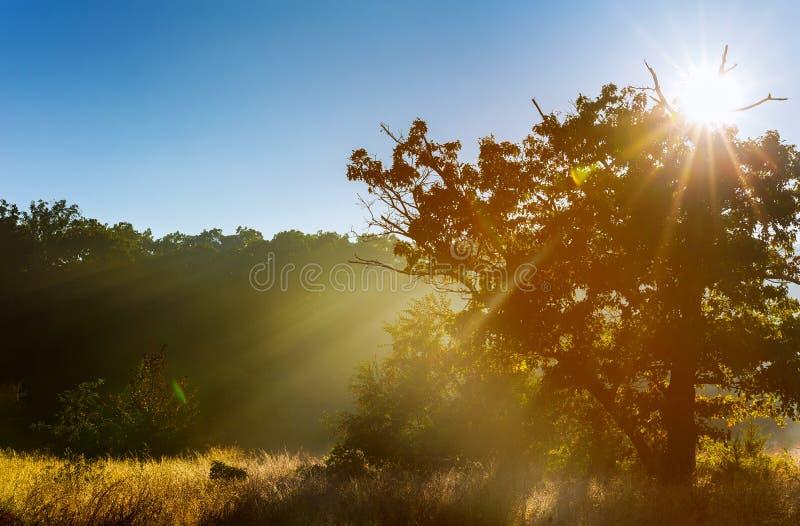 Real é bonito Névoa fresca do amanhecer no nascer do sol bonito da floresta na névoa da imagem de stock