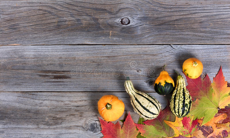 Real autumn gourd decorations and leaves on rustic wooden boards. Overhead view of real autumn gourd decorations and leaves, lower right border, on rustic wooden royalty free stock images