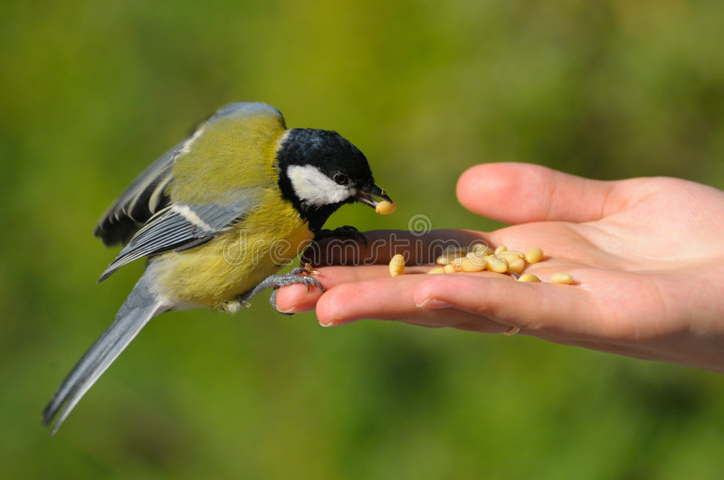Download A Real Bird In The Hand Royalty Free Stock Photo - Image: 6554785