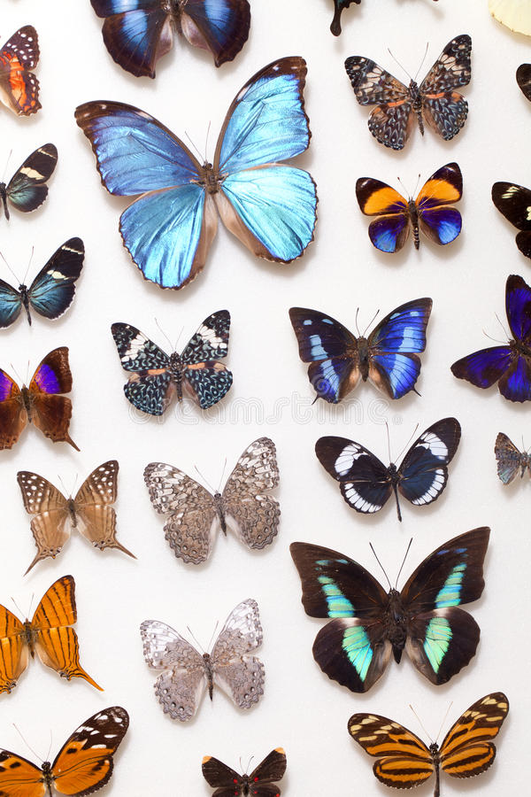 Real Butterfly Collection stock photography