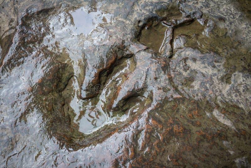 Real dinosaur footprint , Thailand. Real dinosaur footprint stone , Thailand royalty free stock image