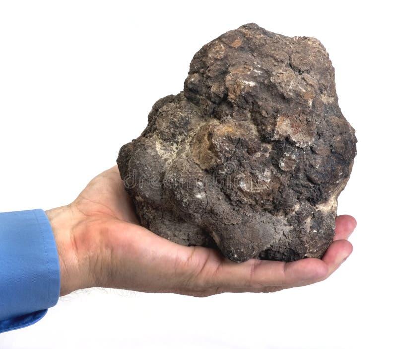 Real Dinosaur Poop. Real dinosaur poop in hand called coprolite, 140 million years old royalty free stock photo