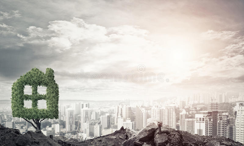 Real estate investments. House shaped green tree as real estate concept royalty free stock images