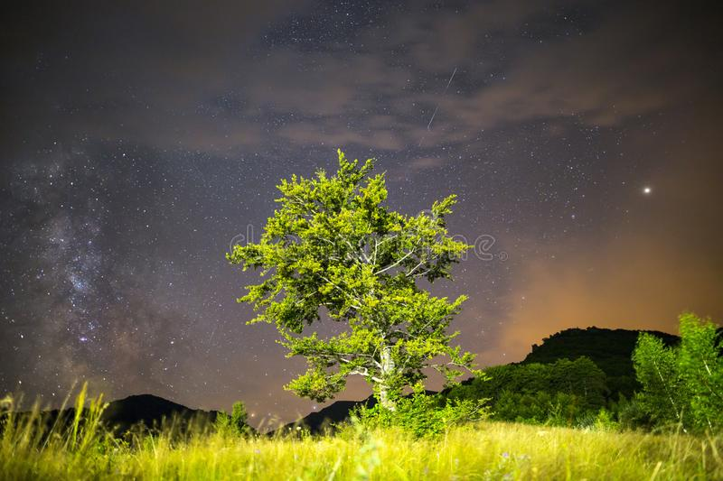 Real falling/shooting star Green tree Milky way royalty free stock images