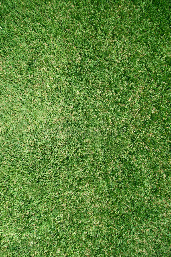 Download Real grass lawn texture stock image. Image of cutting, carpet - 679261
