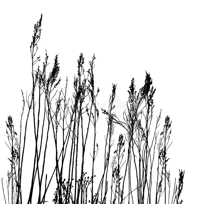 Real grass silhouette / vector royalty free illustration