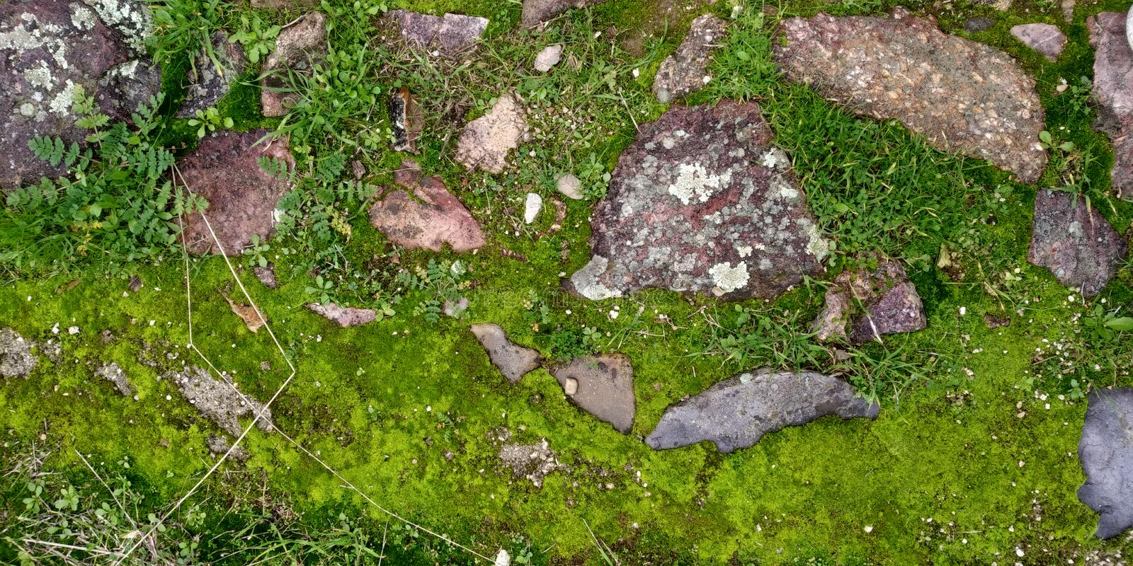 Real Green Moss Seamless Texture. Real Moss Texture with Stone on the Rock Musgo Verde royalty free stock photography