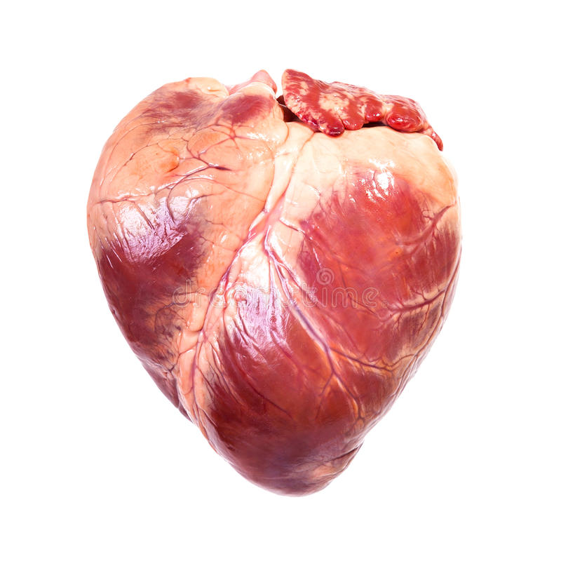 Real heart stock photography