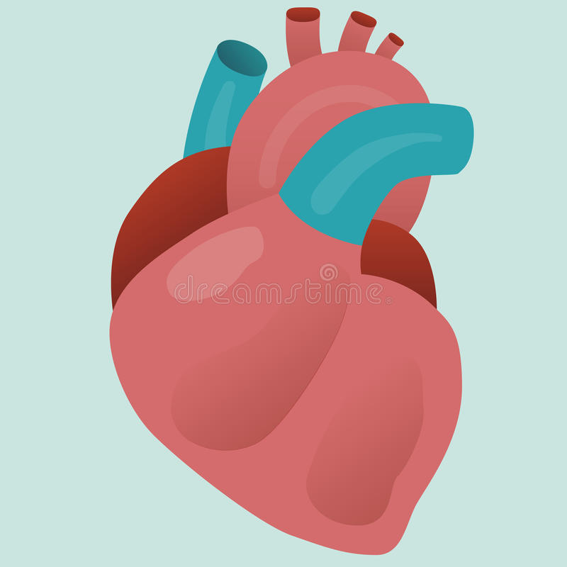 Real Human orgran. Real human isolated organ heart vector for your ideas vector illustration