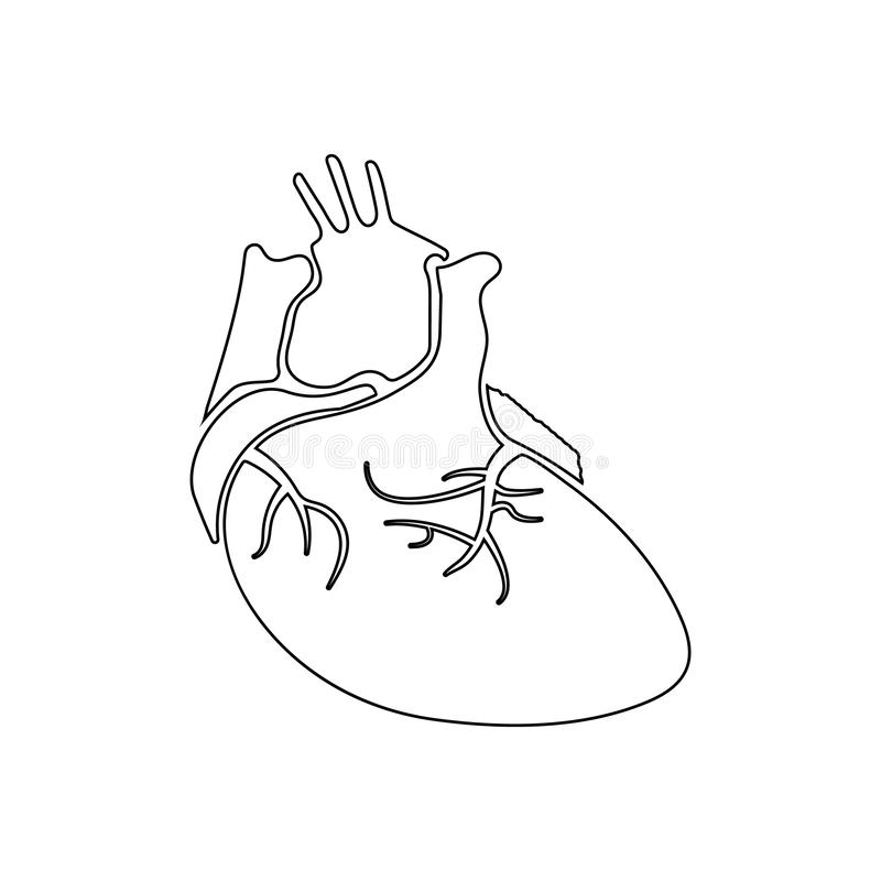 Real Heart Stock Illustrations – 4,222 Real Heart Stock