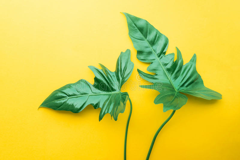 Real leaves on pastel color background.Botanical tropical stock photography