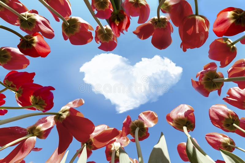 Real love is in the air. Up view of concentric setting of red tulips pointing to a heart shape cloud in a blue and vivid spring sky concept