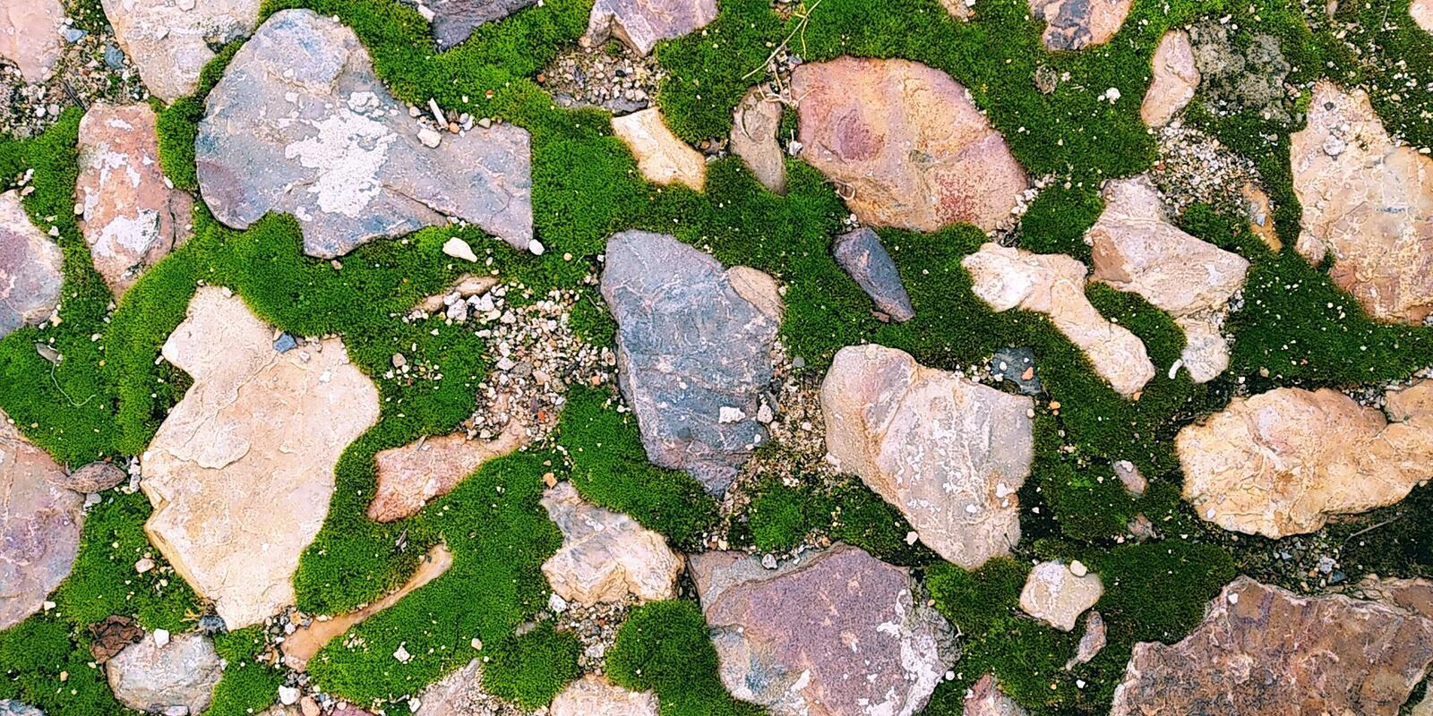 Stones with Green Moss Seamless Texture. Real Moss Texture with stones or Rocks. Musgo Verde royalty free stock photography