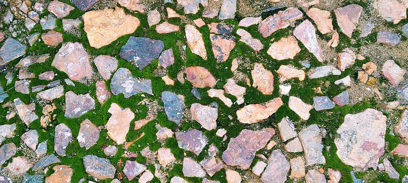 Stones with Green Moss Seamless Texture. Real Moss Texture with stones or Rocks. Musgo Verde royalty free stock photo