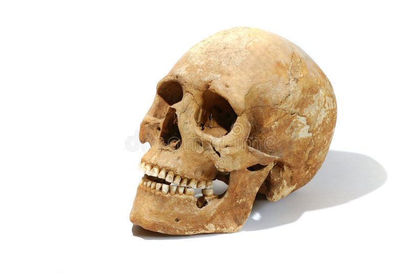 Real old human skull. Real ancient human skull on white clear background. Cliping path included (skull without shadow royalty free stock photos