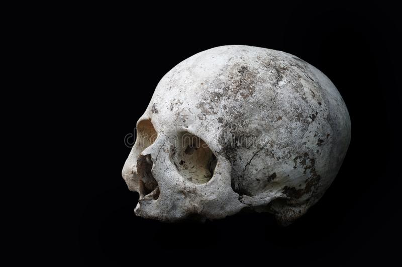 Real old human skull on a black background cranium close up. Real old human skull on a black background cranium closeup stock photo