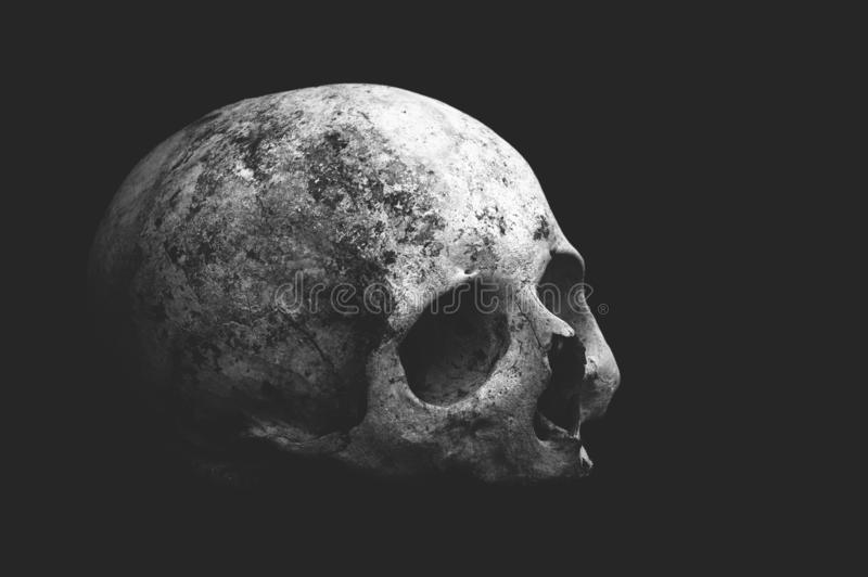 Real old human skull on a black background cranium close up. Real old human skull on a black background cranium closeup stock images