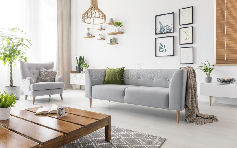 Real photo of grey sofa with green cushion and blanket standing in white living room interior with simple posters, fresh plants, a. Rmchair and wooden coffee stock photo