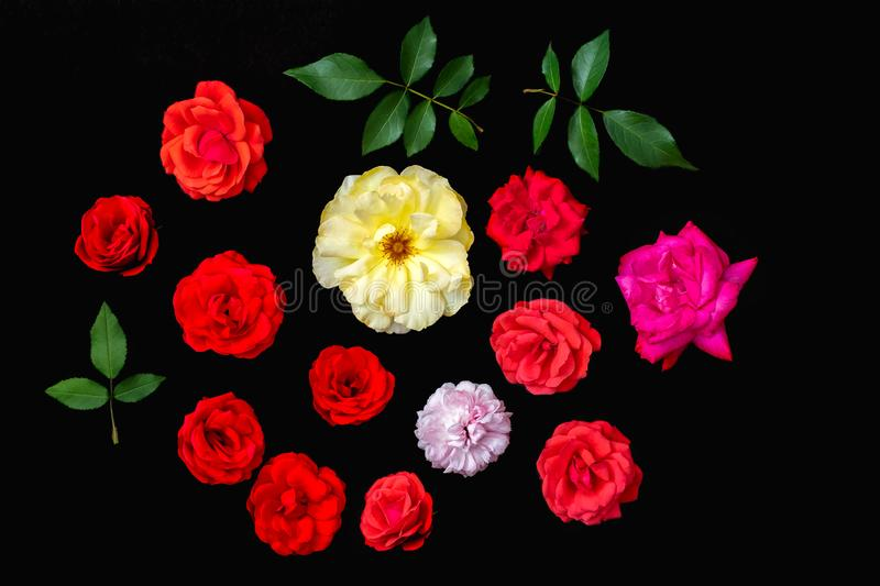 Real rose flower selection, Craft cut-out. Black background flat-lay stock image