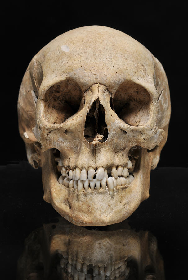 Free Real Skull Human On A Black Background Royalty Free Stock Photo - 19387005
