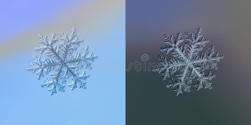 Real snowflake macro photo royalty free illustration