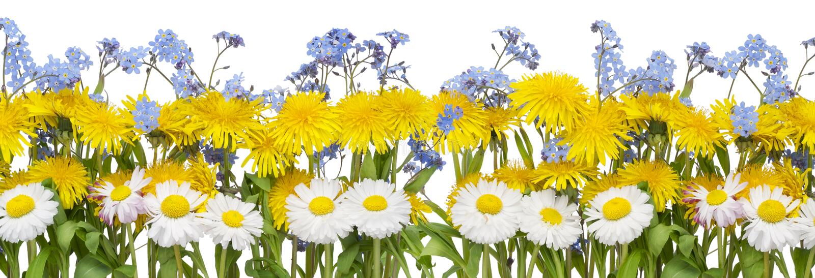Real spring flowers border stock photo image of blue 19534594 download real spring flowers border stock photo image of blue 19534594 mightylinksfo