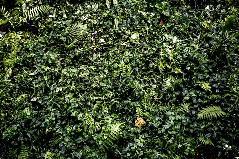 Real tropical green leave in the forest. stock photography