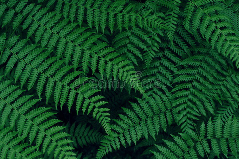 Real tropical leaves background, jungle foliage royalty free stock photo