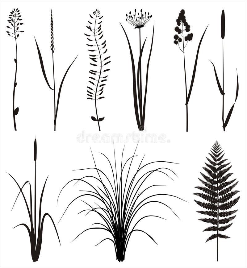 REALES GRAS-SCHATTENBILD lizenzfreie abbildung