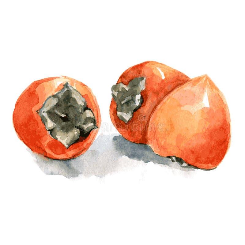 Realismo anaranjado de la acuarela del caqui Vector aislado en el fondo blanco ilustración del vector