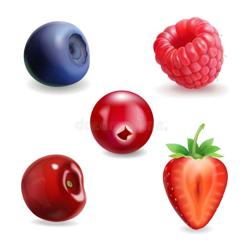 Free Realistic Berry Set. Strawberry, Raspberry, Blueberries, Cherry Black Currant Illustration Stock Image - 107427701