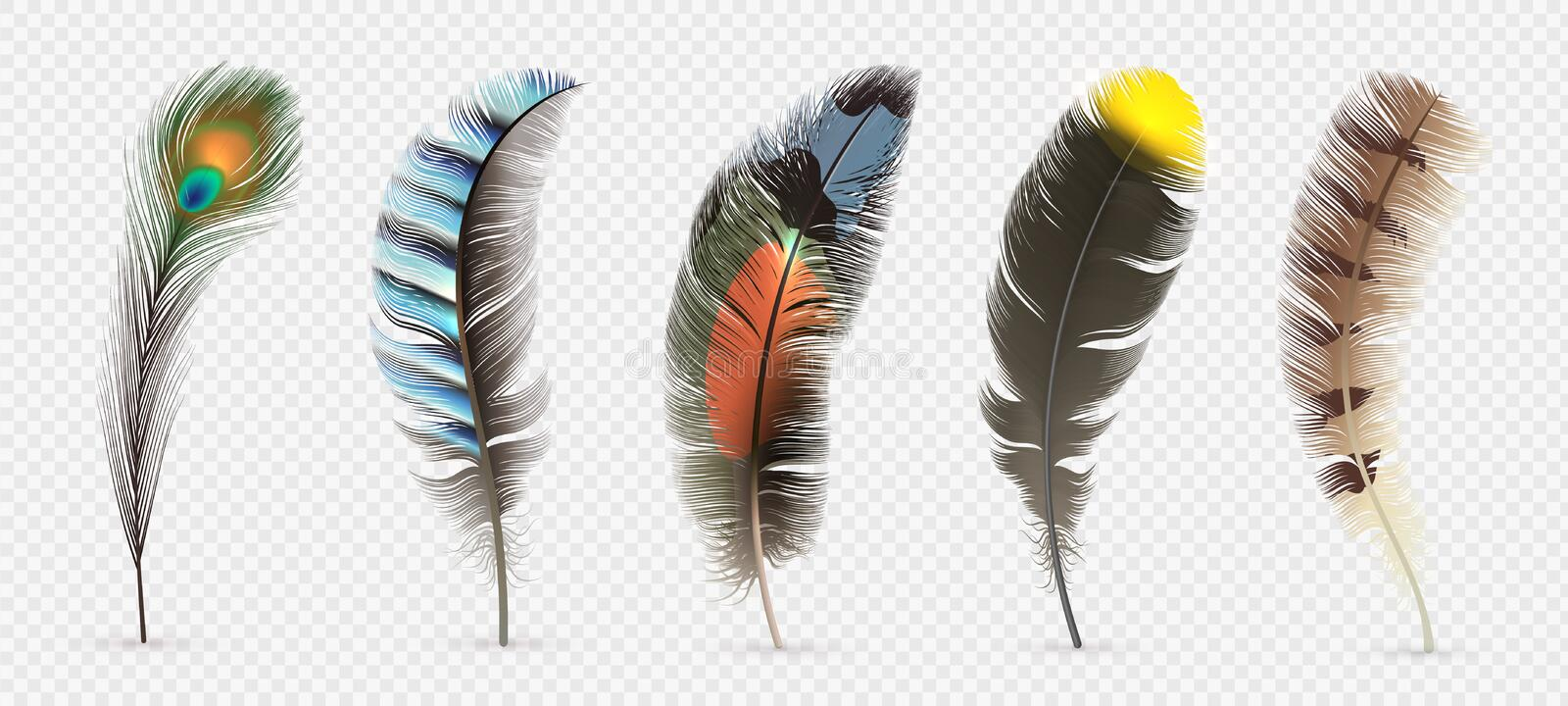 Realistic bird feathers. Detailed colorful feather of different birds. 3d vector collection isolated on transparent vector illustration