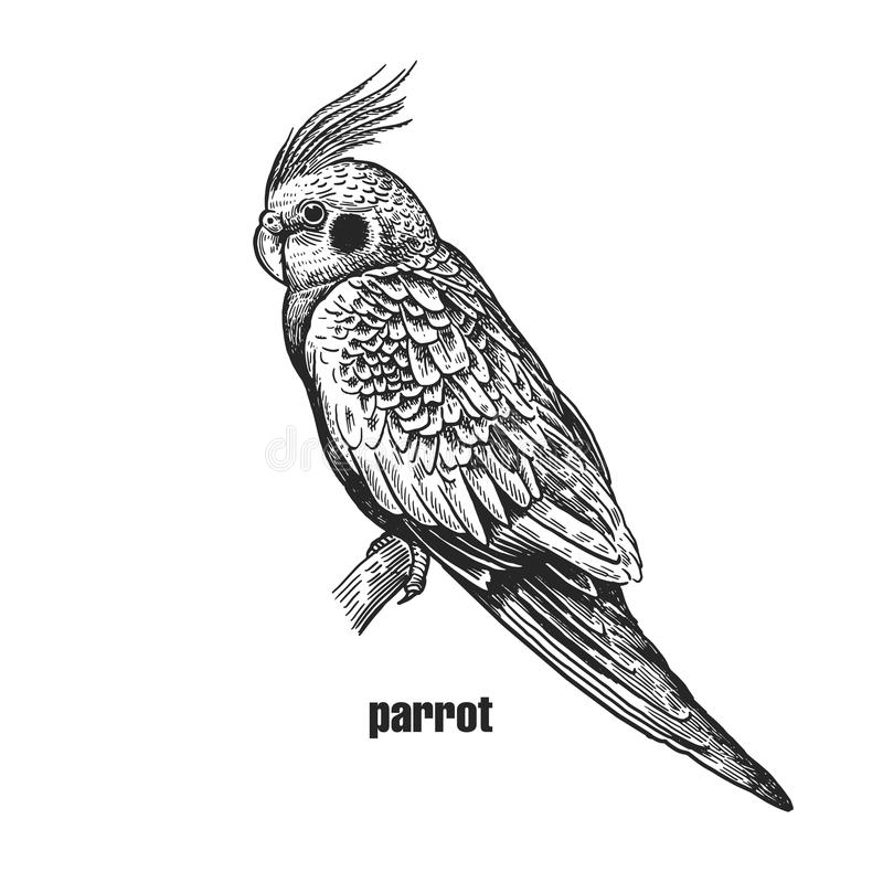 Realistic bird Parrot with crest and pink cheeks. Black and whit vector illustration