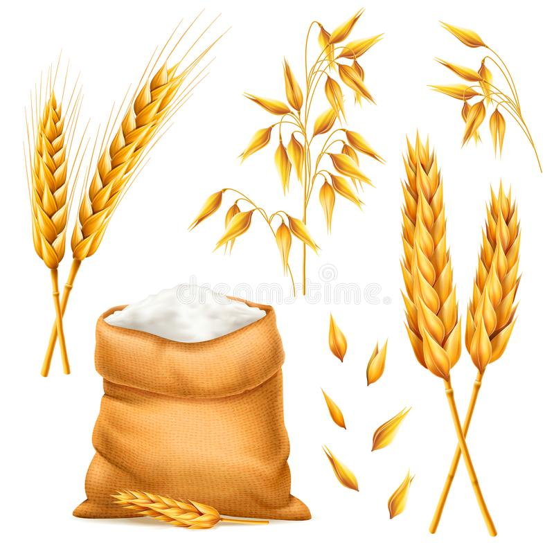 Free Realistic Bunch Of Wheat, Oats Or Barley With Bag Of Flour Isolated On White Background. Vector Set Of Wheat Ears Royalty Free Stock Images - 112432359