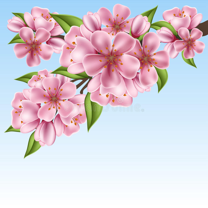 Realistic cherry tree branch with pink flowers for spring stock illustration