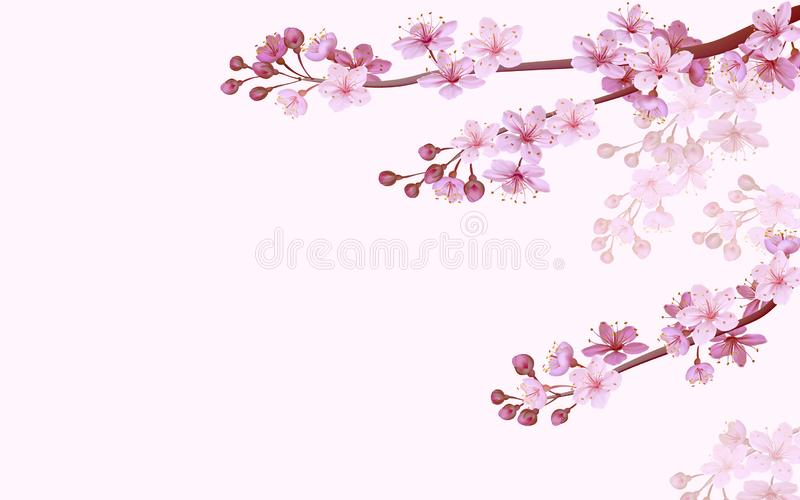Realistic chinese pink sakura background on soft rose background. Oriental pattern flower blossom spring background. 3D royalty free illustration