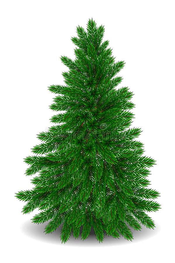 Free Realistic Christmas Tree. Vector Royalty Free Stock Photography - 128979017