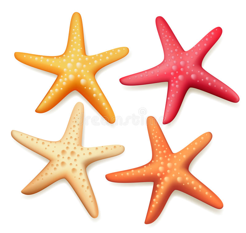 Realistic Colorful Starfish Set in White Background vector illustration