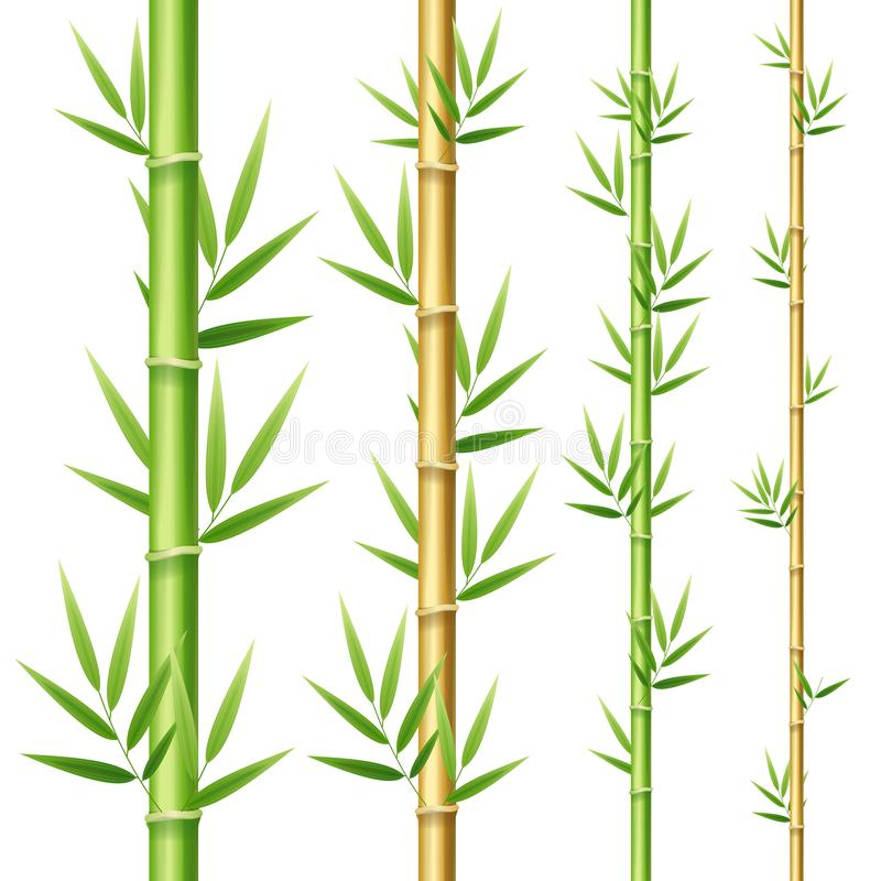 Realistic 3d Detailed Bamboo Shoots Set. Vector vector illustration