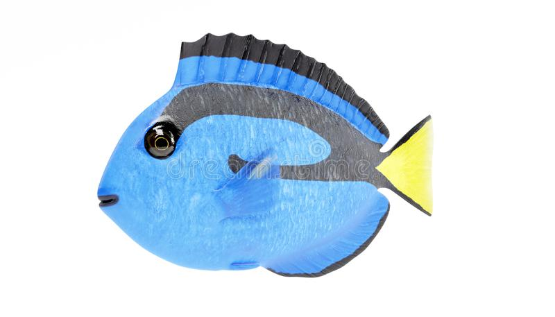 3D Render of Blue Tang Fish. Realistic 3D Render of Blue Tang Fish stock illustration
