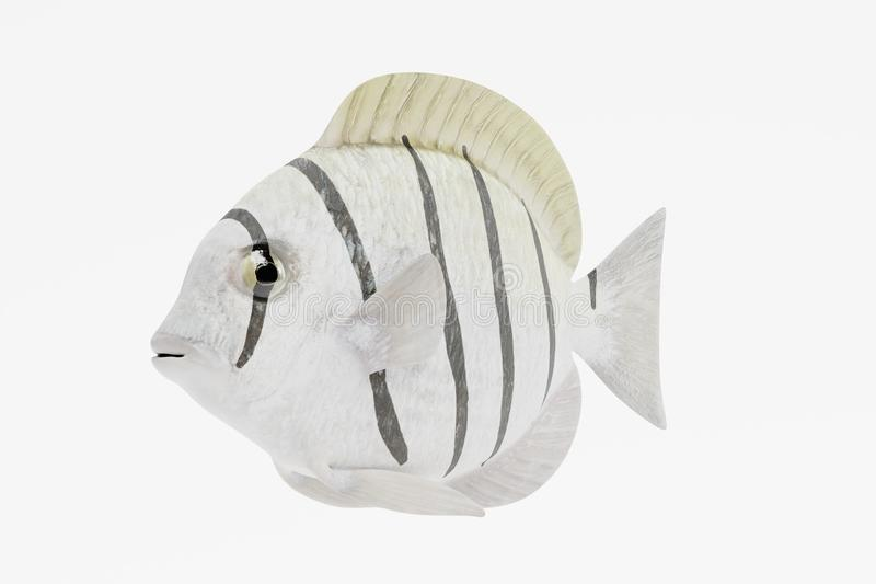3d Render of Convict Tang Fish. Realistic 3d Render of Convict Tang Fish stock illustration